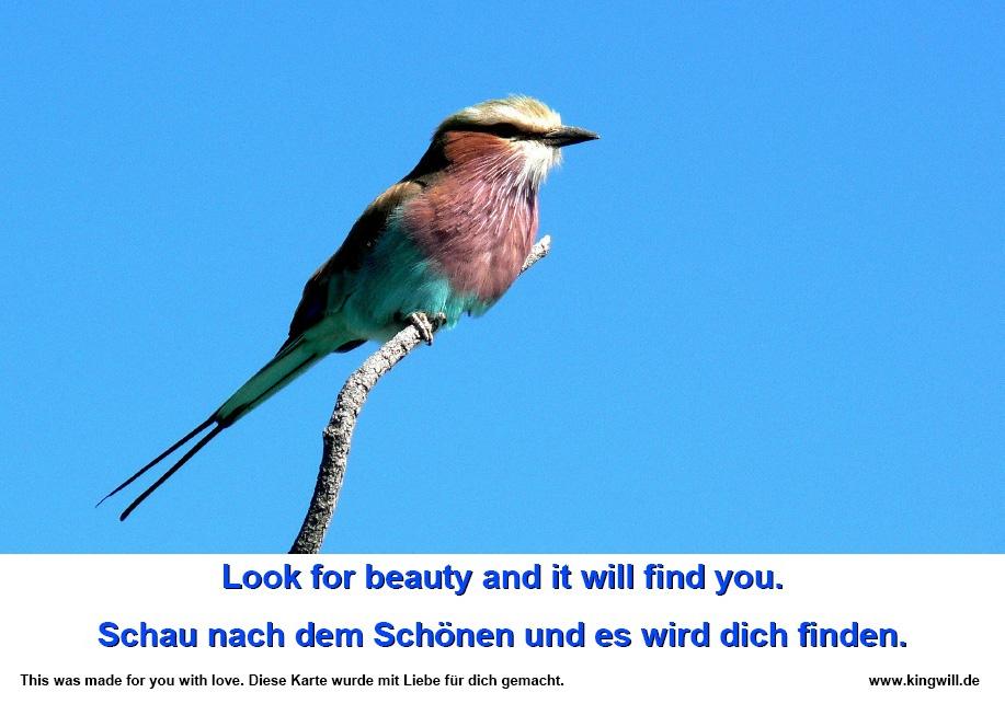 Leuchtender Sunbird