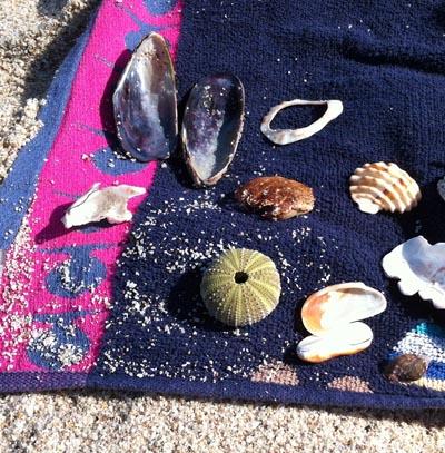 Strandschätze die bleiben dürfen
