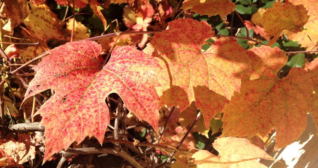 Herbst am isb
