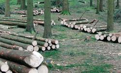 Klimafitter Wald