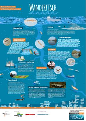 Poster Wanderfisch. Quelle: BildungsCent e.V.