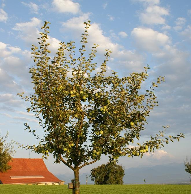 Ernte Patenbäume