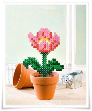 Nabbi-Blumen im Topf