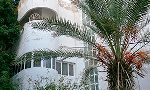 Bauhaus mit Palme