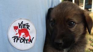 VIER PFOTEN hilft rumänischen Streunerhunden