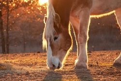 Expertentipp - Ältere Pferde richtig füttern