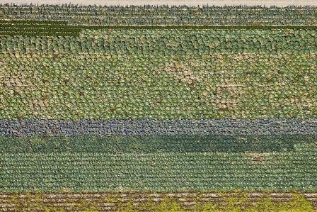 """Ismaning Krautfeld, Foto: Klaus Leidorf (Bild aus der Ausstellung """"Vogelperspektive. Luftbilder von Klaus Leidorf"""" im Schlossmuseum Ismaning)"""