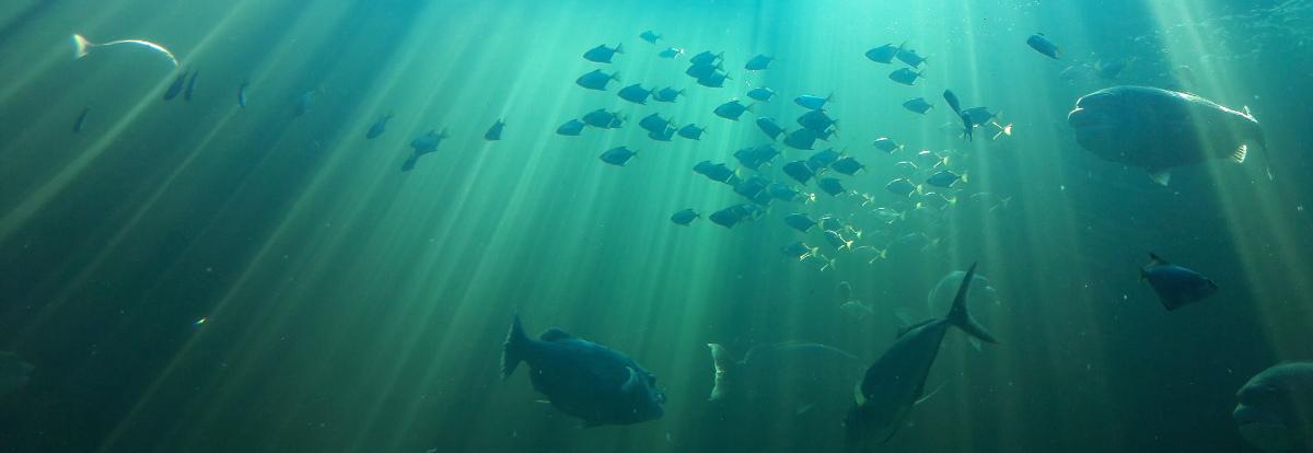 unter der Oberfläche