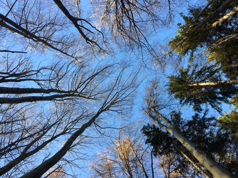 den Bäumen lauschen