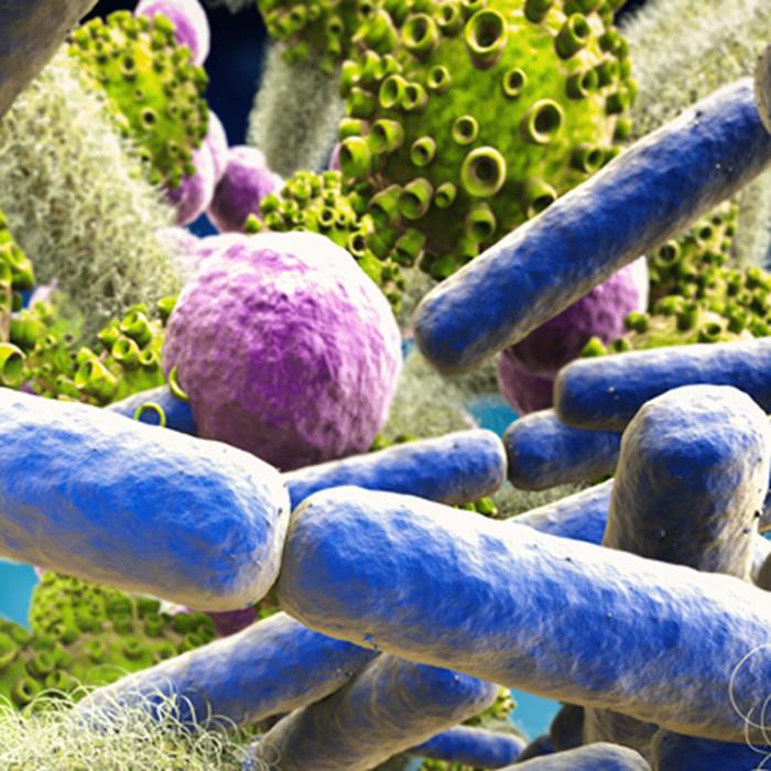 3D-Bakterien