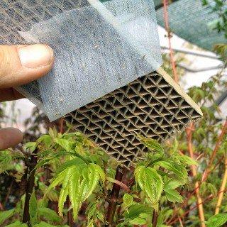 So sieht ein Kästchen mit Floorfliegenlarven aus.