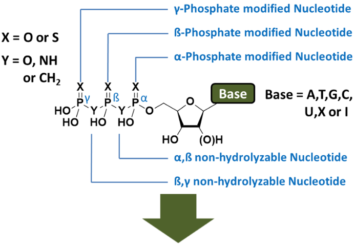 Non-hydrolyzable nucleotides