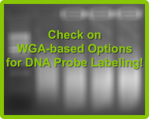 Check on WGA-based Options for DNA Probe Labeling!