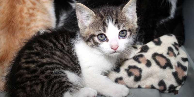 Katzenbabys suchen Start-ins-Leben Paten