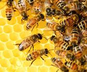 Bienen am SZG Airport