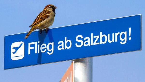 Flieg ab SZG
