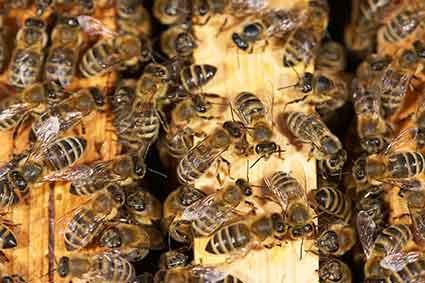 Die Familie Seip wünscht eine gute Bienensaison 2018!