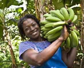 Mable Matetsu arbeitet auf der Bananenplantage Volta River Estates in Ghana. Quelle: Fairtrade