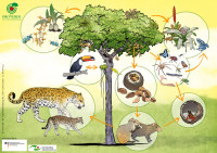 Bildungsmaterial Vielfalt in Natur und Gesellschaft. Quelle: Tropenwaldstiftung OroVerde