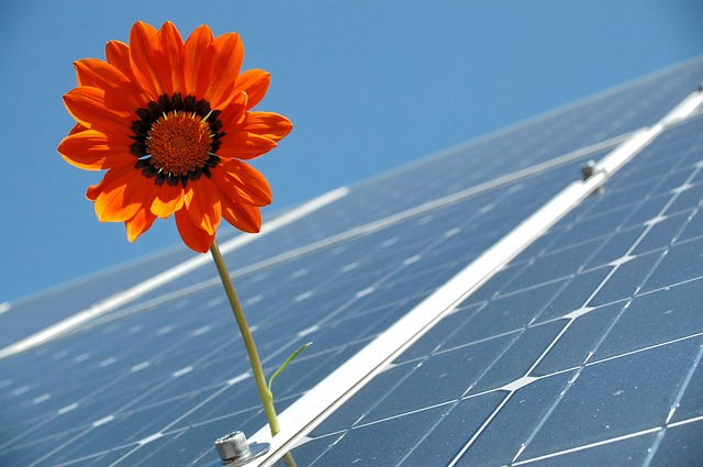 Photovoltaik auf Dach mit Sonnenblume