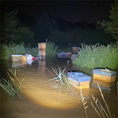 Von der Flut fortgeschwemmte Bienenstöcke