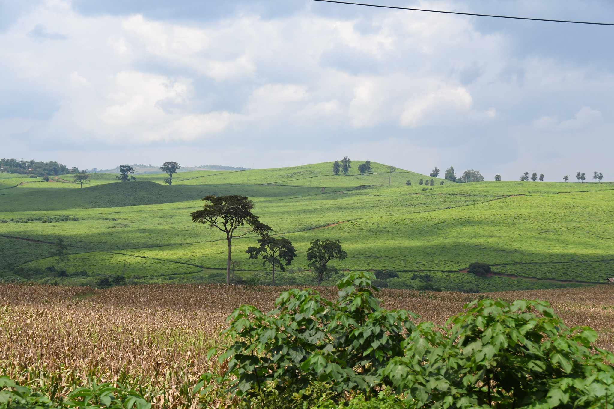 Uganda Landschaft