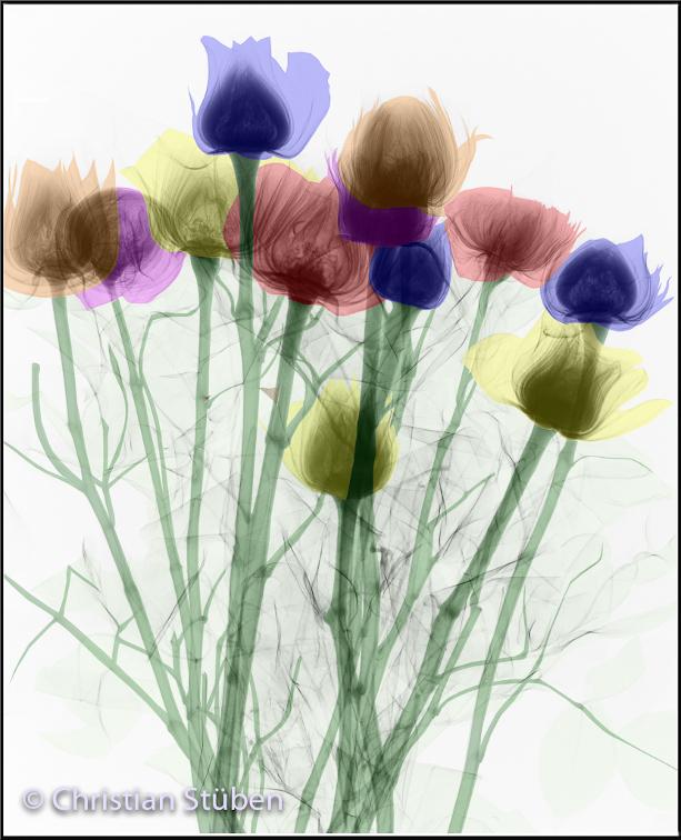 Blumenmuster-_Iris