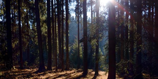 Ansicht mitten aus dem Bayerischen Wald bei Sonnenschein