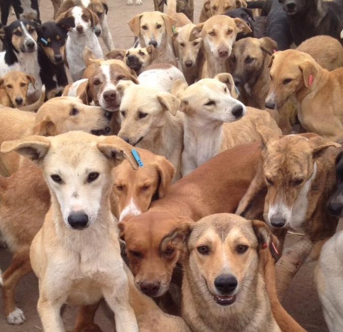 Hunde Agadir