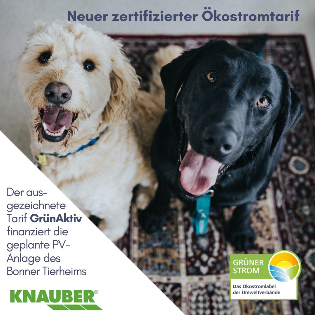 Grünstrom von Knauber