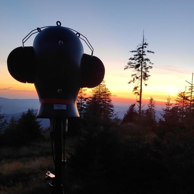 Kunstkopf im Wald bei Sonnenaufgang