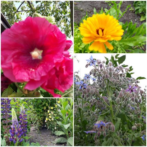 Devah Urban Gardening Greta