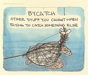 """""""Bycatch"""" from sketchplanations.com"""