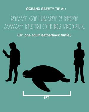 Abstand: Eine Lederschildkrötenlänge! (c) OceanX