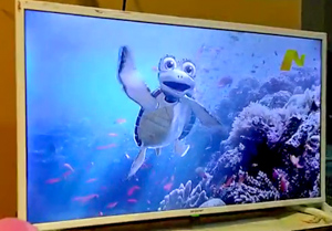 Turtle Foundation mascot Kimi speaks in TV spot against turtle shell trade in Indonesia