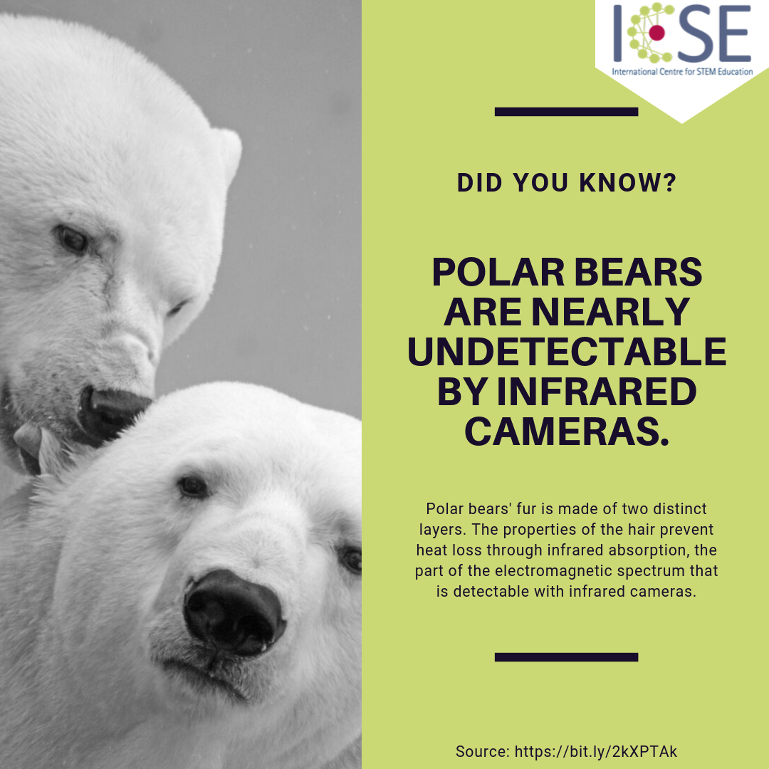 Fun Fact Polar Bear