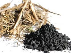 Pflanzenmaterial, Kohle