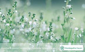 Logo Homöopathie Forum Pflanzen in Wiese
