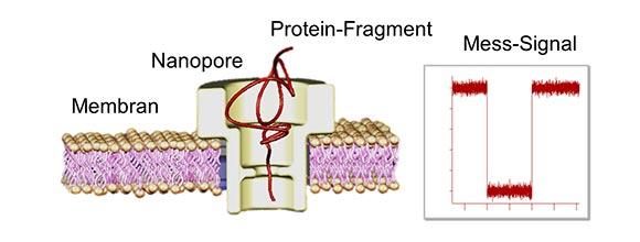 Schema einer Nanopore