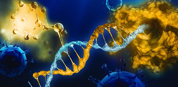 DNA-Kresbzellen