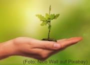 ein Pflanze steht in einer offenen Hand