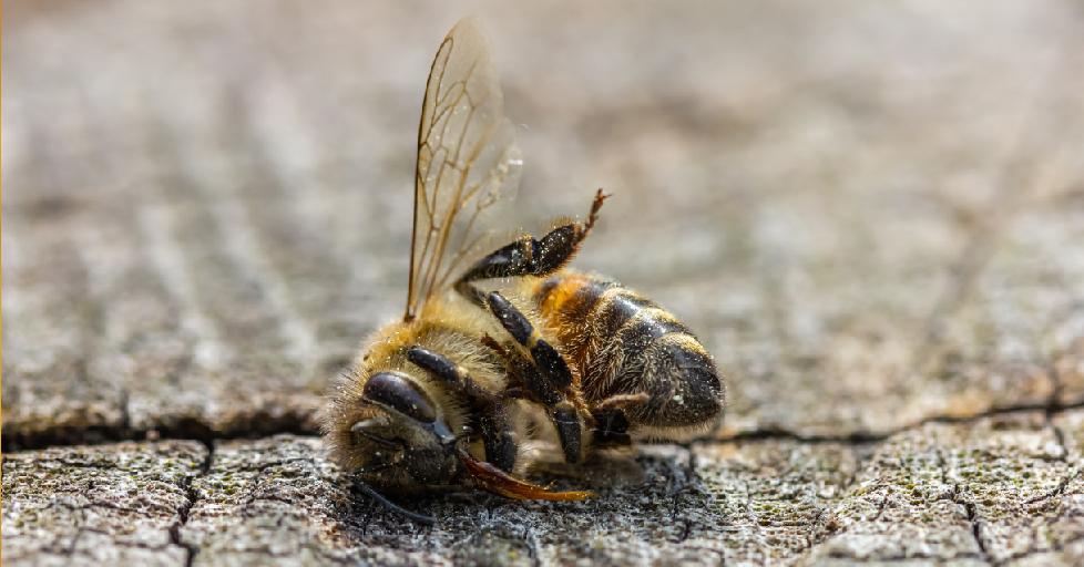 Bienen und Bauern retten
