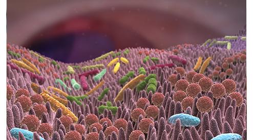 Vitamin D und das intestinale Mikrobiom