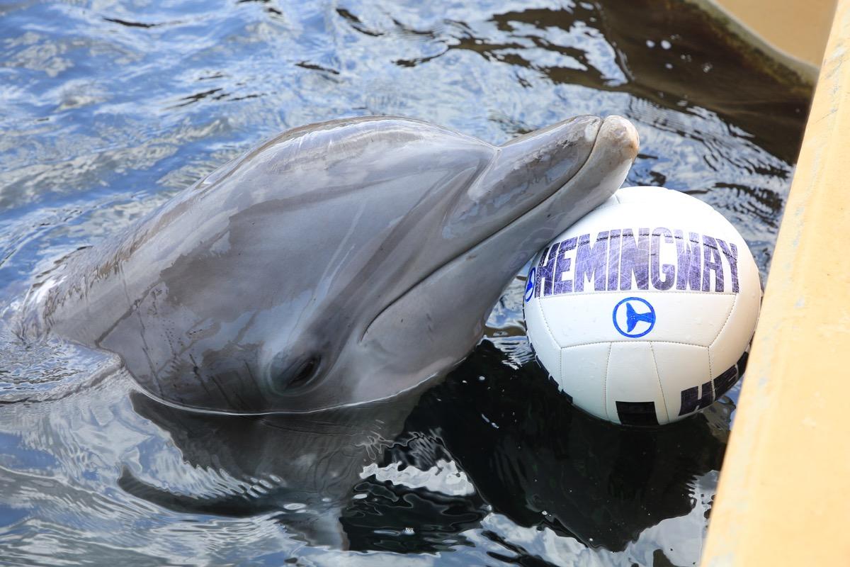 Delfin-Kollege bei der Namenswahl