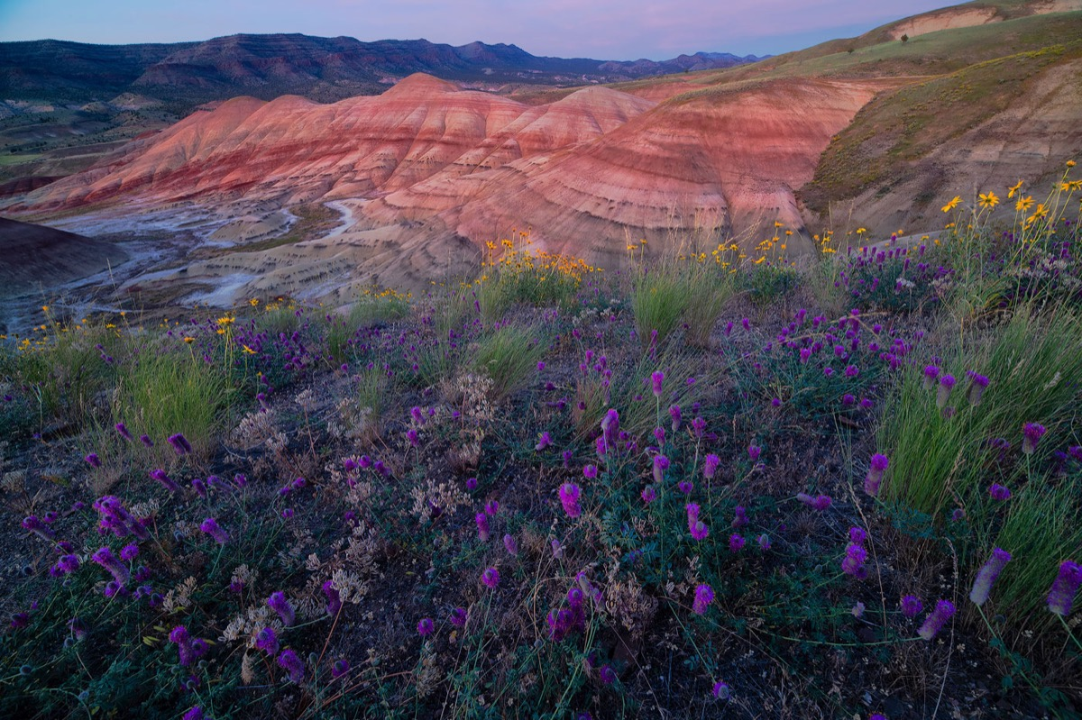 Wildblumen im Painted Hills National Monument