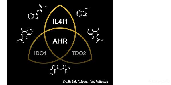 Stofwewechselenzym IL4I1