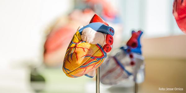 3D-Figur menschl. Herz