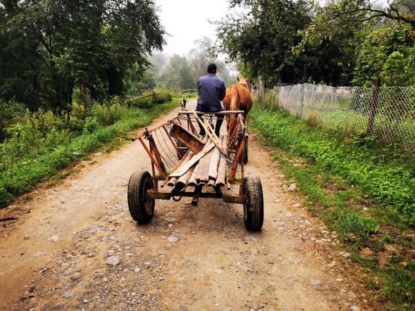 Kutsche auf Landstraße in der Ukraine