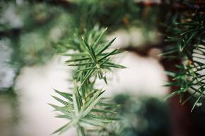 Weihnachtsbaum gesucht