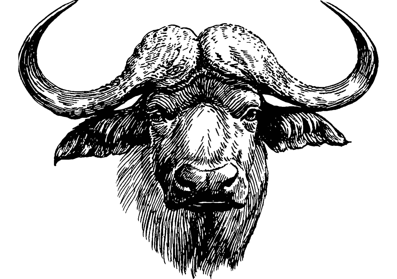 Jahr des Büffels